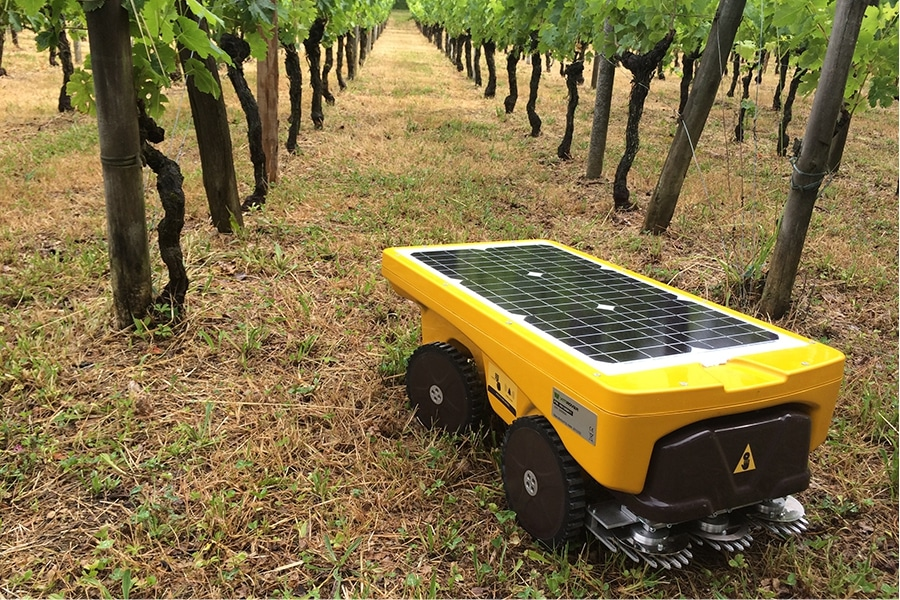 Autonomous mowing and complete floor cover for weed control