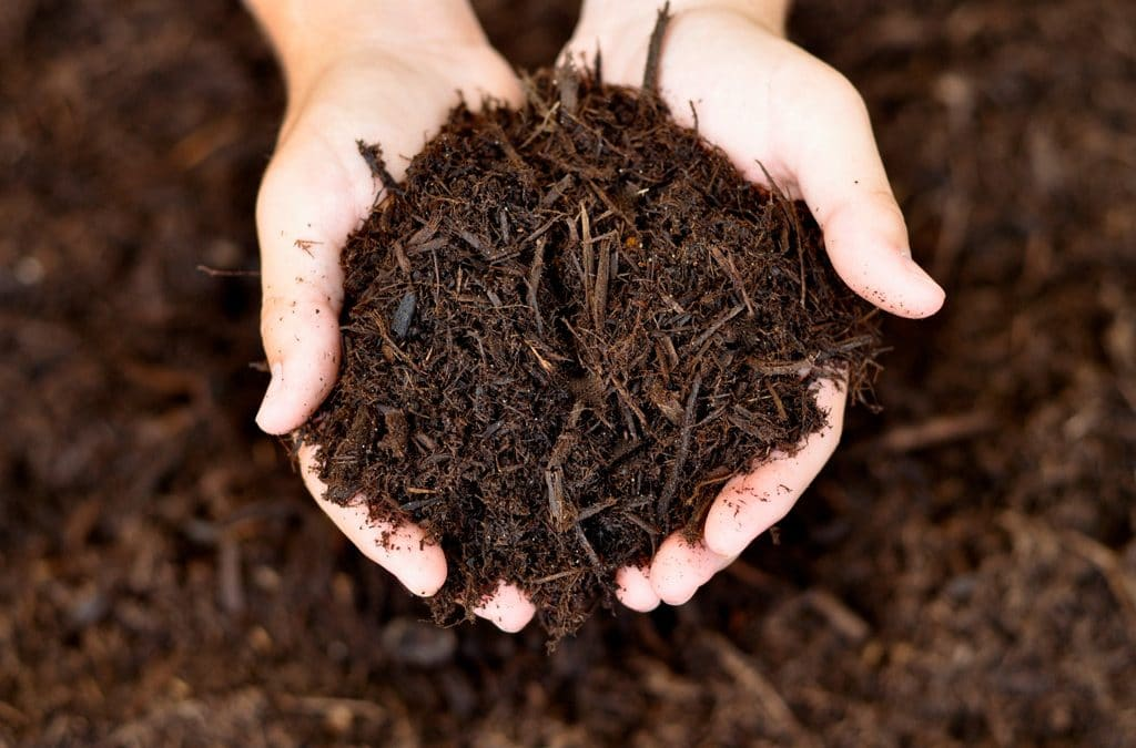 Groundcover mulching in vineyards improves soil health already in the short term